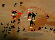 camel 2a