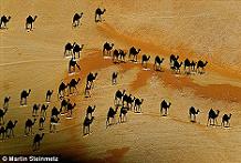 camel1a